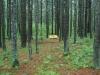 Bench at Destruction Brook Woods