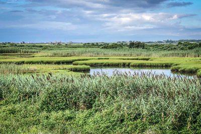 Cover---Ocean-View-Farm---Joanne-Humphrey