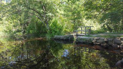 June: Bridge at Destruction Brook - Jackie Eckhardt