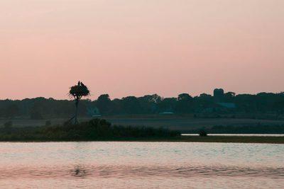June---Osprey-at-the-Slocum's-River---Joney-Swift