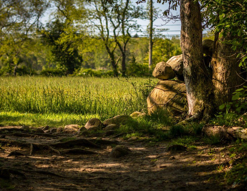 August - Hugh Fanning - Leaving Destruction Brook Woods
