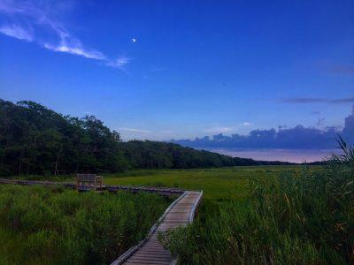 August: Moonrise over Frank Knowles-Little River Reserve - Margaret Murphy