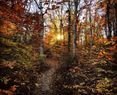 October: Fall, Destruction Brook Woods - Ted Willard