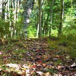 September - McBratney Reserve - Leah Howard