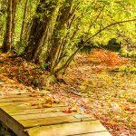 October - Fall at Wernick Farm - Joanne Humphrey