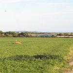Ocean View Farm