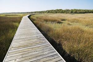 Frank Knowles-Little River Reserve Boardwalk