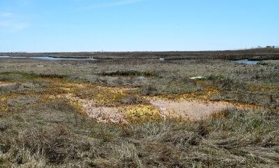 An Area of Marsh Die Back