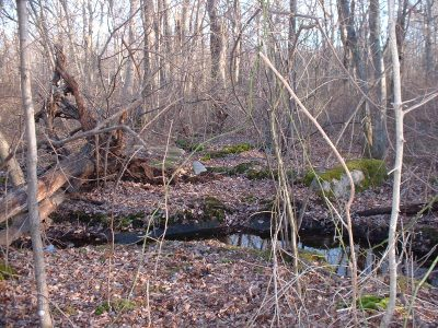 White Pine Wildlife Refuge