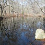 Parsons Reserve Vernal Pool