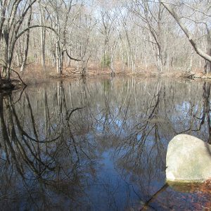 Parsons Reserve Vernal Pool