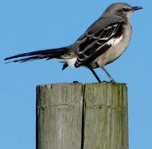 bird-footer