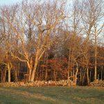 Destruction Brook Woods