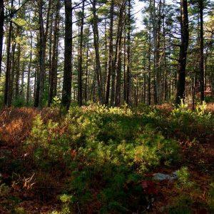 Ridge Hill Reserve