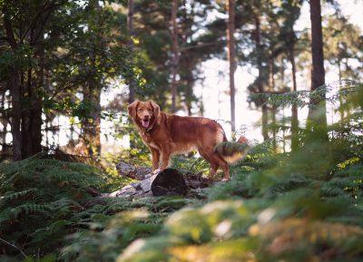 New DNRT Dog Rule