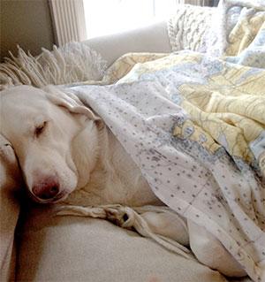 Dartmouth Blanket