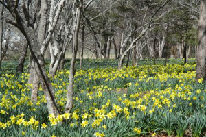 Parson Reserve