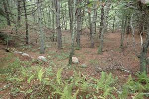 Paskamansett Woods