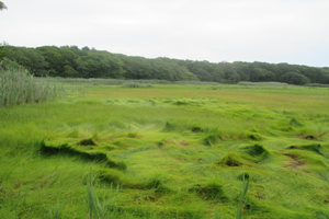 Peter's Creek Reserve