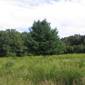 Smith Farm Reserve