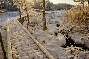 Snow at Frank Knowles-Little River Reserve