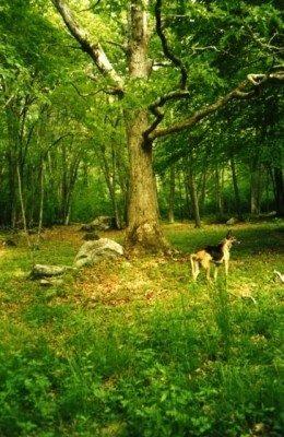 White Pine Wildlife Reserve