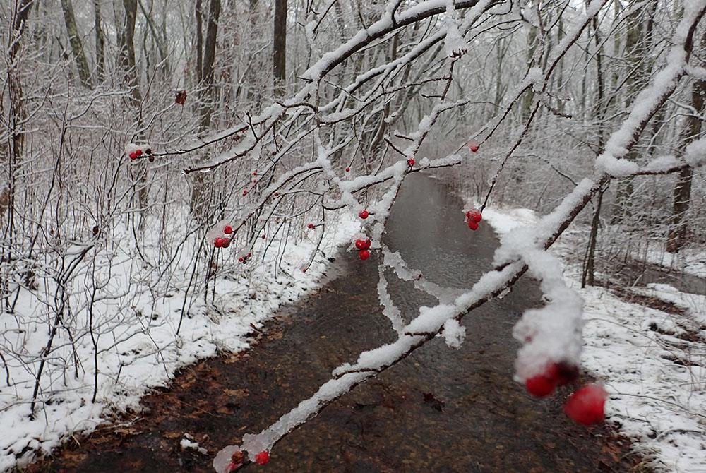 Winter at DNRT